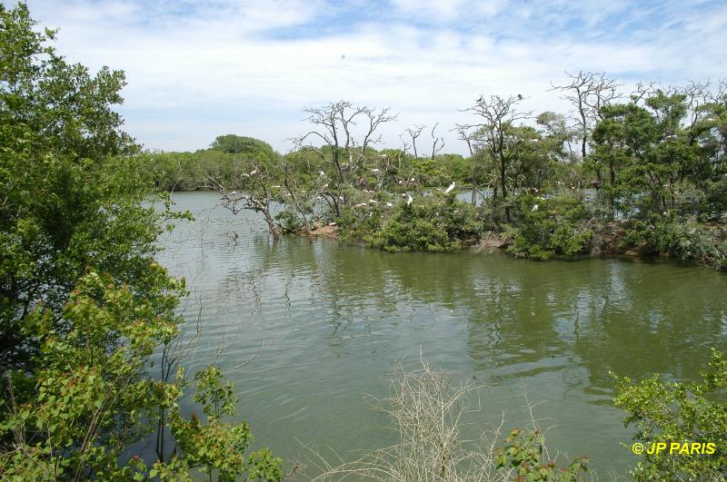 Smith Oaks Bird Sanctuary